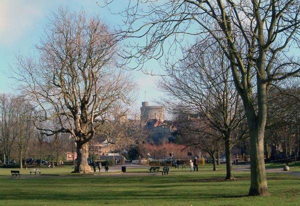 Edward VII Tree Feb 2010