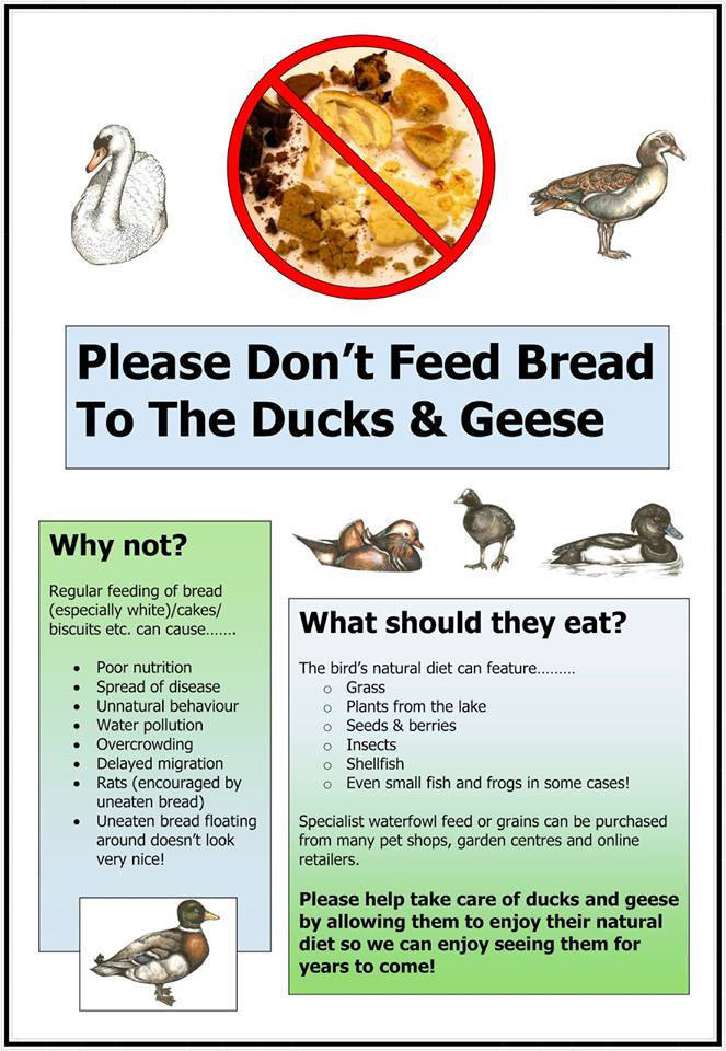 dont%20feed%20the%20ducks.jpg